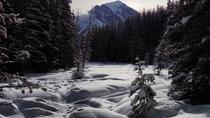 Lake Louise Winter Wildlife Snowshoe Tour, Banff, Ski & Snow