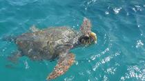 Turtle Spotting Cruise in Zakynthos, Zakynthos, Day Trips