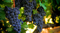 Alcatraz with Napa and Sonoma Wine Country Tour, San Francisco, Wine Tasting & Winery Tours