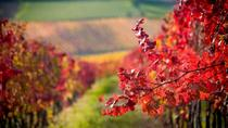 Tri-Valley Half Day Wine Experience, San Francisco, Wine Tasting & Winery Tours