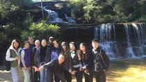 Private Blue Mountains and Australian Wildlife Experience Eco Tour, Sydney
