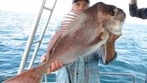 Gold Coast Half-Day Fishing Charter, Gold Coast, Fishing Charters & Tours