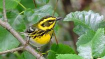 Birdwatching: Discovering the Birds of Hoonah