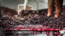 Montalto Vineyard: Behind-the-Scenes Winery Tour with Gourmet 3-Course Lunch, Mornington Peninsula,...