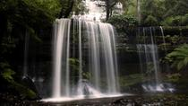 Mt Field National Park Active Day Trip from Hobart Including Bonorong Wildlife Sanctuary and Mt...