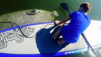 SoBe Surf Florida Paddle Board and Kayak Eco Manatee Tour, Cocoa Beach
