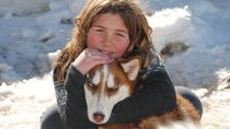 Half Day Tour of the San Juan Mountains by Dogsled, Durango, Ski & Snow