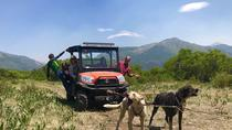 Summer Kennel Tour and Mushing Adventure, Durango, 4WD, ATV & Off-Road Tours