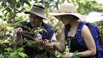 Puerto Limon Shore Excursion: The Real Coffee Tour, Limon, Ports of Call Tours