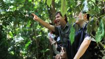 Rain Forest Nature Walk Expedition and Banana Plantation from Limon, Limon, Ports of Call Tours
