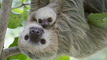 Sloths Lovers, Limon, Ports of Call Tours
