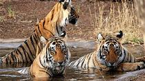 Ranthambore Day Trip from Jaipur, Jaipur, Day Trips