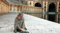 Excursion To Chand Baori Abhaneri Stepwell & Bhangarh Fort with Monkey Temple, Jaipur, Day Trips