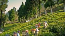 Excursion to Tea Estate Tour With Tea Processing Tour with Transportation, Darjeeling, Half-day...