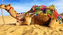 Experience Pushkar Camel Fair Festival with Transportation & Guide only, Jaipur, Seasonal Events