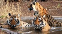 Experience Short Trip Delhi-Corbett 02 Nights - 03 Days With Transportation, Udaipur, Attraction...