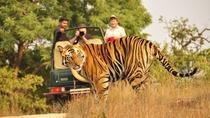 Experience Short Trip Jaipur-Ranthambore 02 Nights - 03 Days With Transportation, Jaipur, Multi-day...