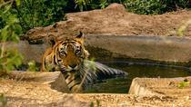 Experience Short Trip Jaipur - Sariska 02 Nights - 03 Days With Transportation, Jaipur, Multi-day...