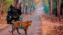 Experience Short Trip with 2 Time Ranthambore Safari with One Night Stay at City, Jaipur, Multi-day...