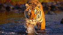 One-Way Private Drop from Agra To Ranthambore National Park Hotel Resort Drop, Agra, Private ...
