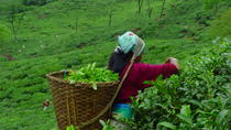 Private Full Day Excursion Happy Valley Tea Estate Trip with Monastery Visits, Darjeeling, Cultural ...