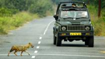 Private Gypsy Safari Admission Ticket in Ranthambore National Park, Jaipur, Sightseeing Passes