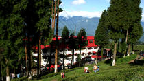 Private Happy Valley Tea Estate Trip With Transportation, Darjeeling, Private Sightseeing Tours