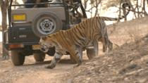 Ranthambore National Park Admission Ticket with Optional Transfer, Rajasthan, Day Trips