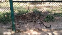 Sajjangarh Biological Wildlife Sanctuary Admission Ticket with Optional Transfer, Udaipur, ...