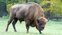 Full-Day Bialowieza National Park Tour from Warsaw, Varsovie