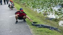 Everglades Airboat Adventure with a FREE South Beach Bike Rental, Everglades National Park, Airboat...