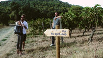 Hiking Tour to Pic St Loup with Wine Tasting from Montpellier, モンペリエ