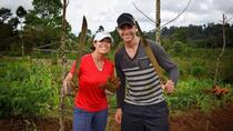 30-Day Volunteering at an Organic Farm in the Tenorio National Park, Liberia, Cultural Tours
