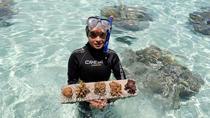 Small-Group Coral Nursery Tour in Bora Bora, Bora Bora, Nature & Wildlife