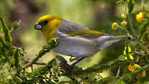 Endangered Birds Of Hawaii, Big Island of Hawaii, Nature & Wildlife