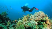 Dedicated Dives for Certified Divers from Puerto Vallarta, Puerto Vallarta, Sailing Trips