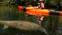 Self-Guided Kayaking Manatee and Dolphin Tour, Cape Canaveral, Boat Rental