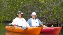 Self-Guided Kayaking Manatee and Dolphin Tour