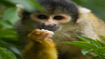 Gatun Lake and Monkey Island Sightseeing Cruise from Panama City, Panama City, Nature & Wildlife