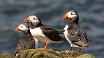 Wildlife Cruise from John O'Groats, The Scottish Highlands
