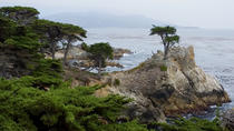 Private Monterey, Carmel and 17-Mile Day Tour from San Francisco, San Francisco, Self-guided Tours ...