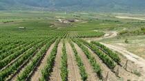 Wine Tasting in Villa Yustina, Plovdiv, Wine Tasting & Winery Tours