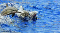 Dolphins or Turtles Guaranteed, Catamaran Morning or Afternoon Snorkel & Lunch, Big Island of ...