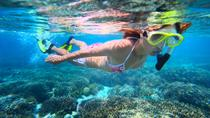Leeward Coast Dolphin and Snorkel Half-Day Cruise, Oahu, Snorkeling