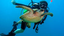 Scuba Diving for Certified 2-tank on the Leeward Coast, Oahu, Scuba Diving