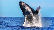Viator Exclusive: Whales guaranteed in Kona, Big Island of Hawaii, Day Cruises