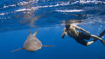 Snorkeling or Scuba Diving  with Sharks in Cabo San Lucas, Los Cabos