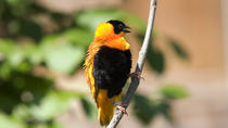 Hawaii Birdwatching Small Group Adventure Tour, Big Island of Hawaii, Helicopter Tours