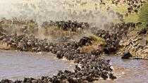 3-Day Maasi Mara Safari from Nairobi, Nairobi, Multi-day Tours