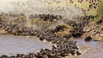 3-Day Maasi Mara Tented Safari from Nairobi, Nairobi, Multi-day Tours